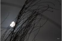 Eclipse partielle du 20 mars
